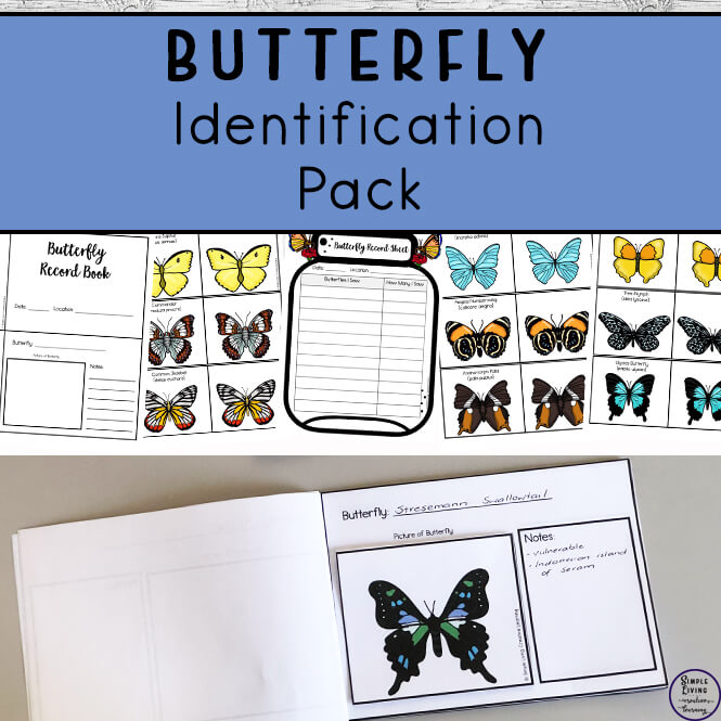 Butterfly Identification Pack