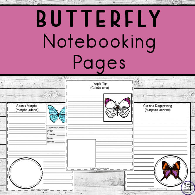Butterfly Notebooking Pages