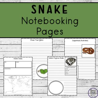 To learn more about them, these Snake Notebooking Pages cover 44 different types of snakes and are a wonderful way to record your research.