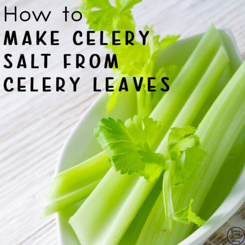 Making your own celery salt is a great way to create a zero waste product, especially when using the leaves of your own homegrown celery. It is very easy to make celery salt from celery leaves in just a few steps.
