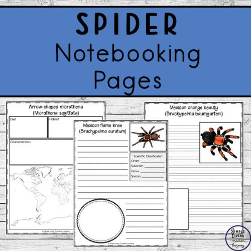 To learn more about them, these Spider Notebooking Pages cover 25 different types of spiders and are a wonderful way to record your research.