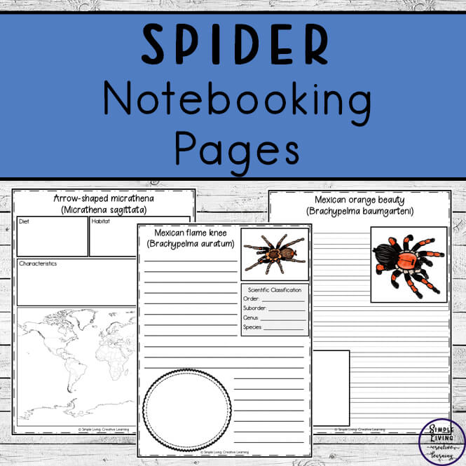 Spider Notebooking Pages