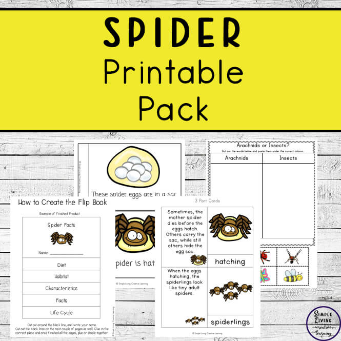 Children in kindergarten, preschool and grade 1 will enjoy learning about spiders and their life cycle with these worksheets.
