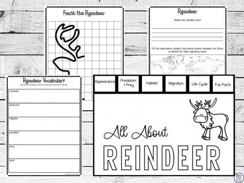 Reindeer Unit Study