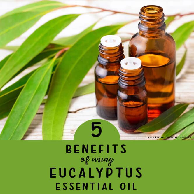 5 Benefits of Using Eucalyptus Essential Oil
