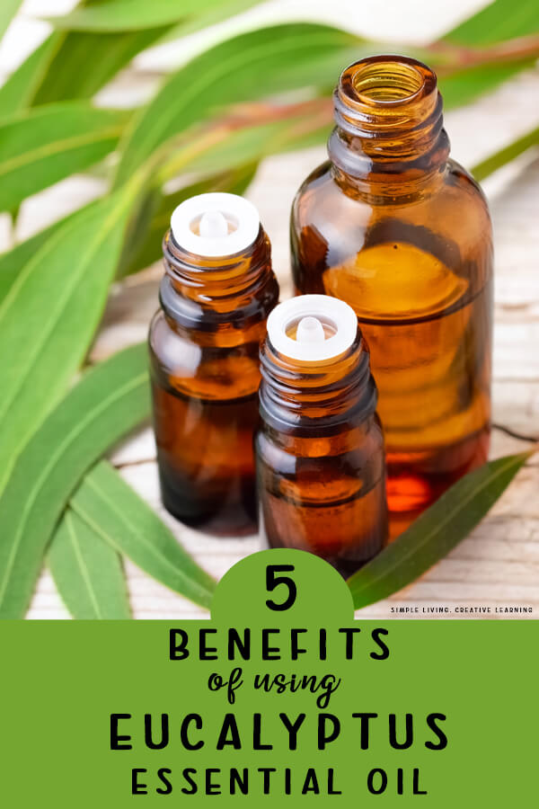 5 Benefits of Using Eucalyptus Essential Oil