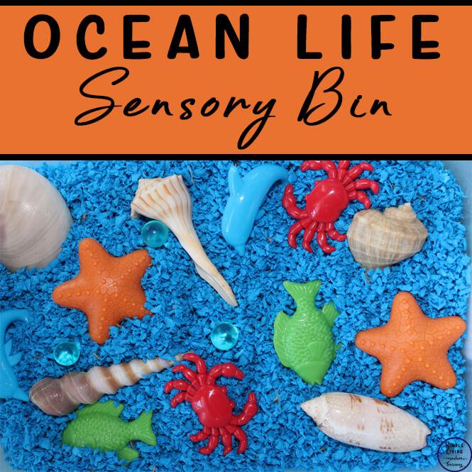 Ocean Life Sensory Bin