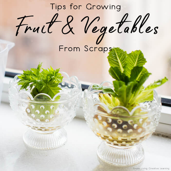 Tips for Growing Fruit and Vegetables from Scraps