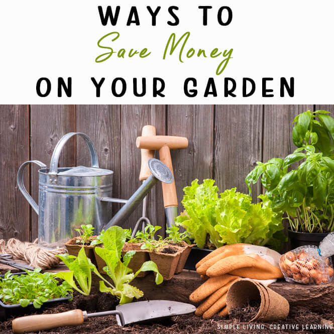 Ways to Save Money on your Garden