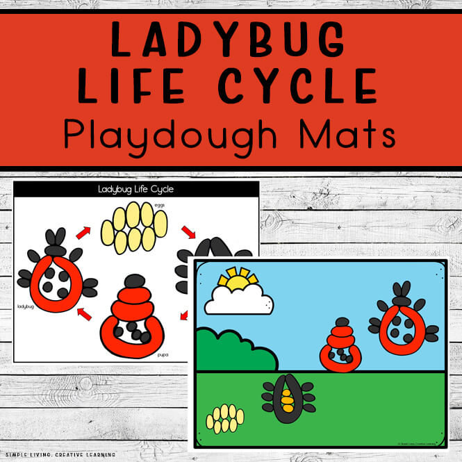 Ladybug Life Cycle Playdough Mats