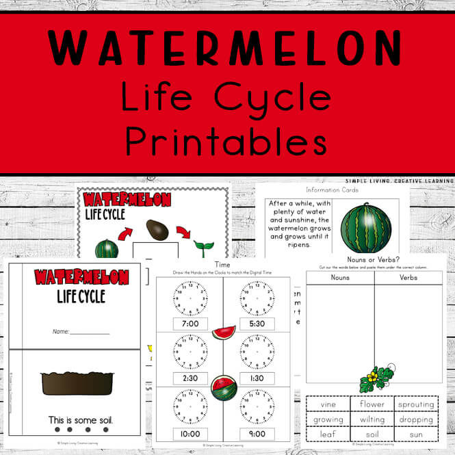 Watermelon Life Cycle Printables