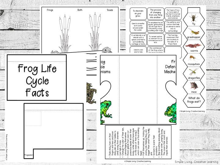 Frog Lapbook