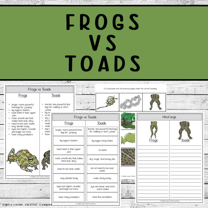 Frogs Vs Toads Printables