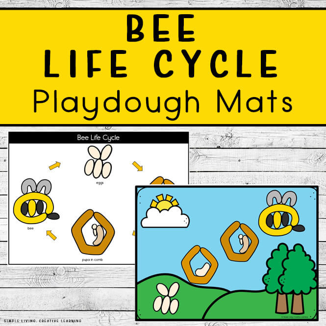 Bee Life Cycle Playdough Mats