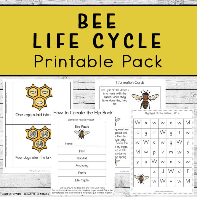 Bee Life Cycle Printable Pack