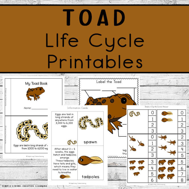 Toad Life Cycle Printables