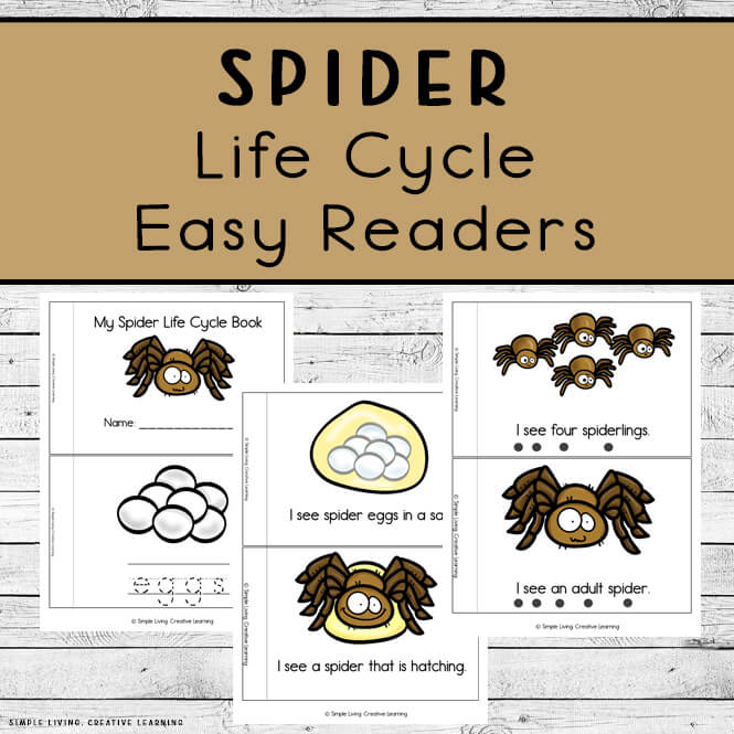 Spider Life Cycle Readers