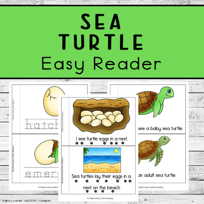 Sea Turtle Life Cycle Easy Read Books