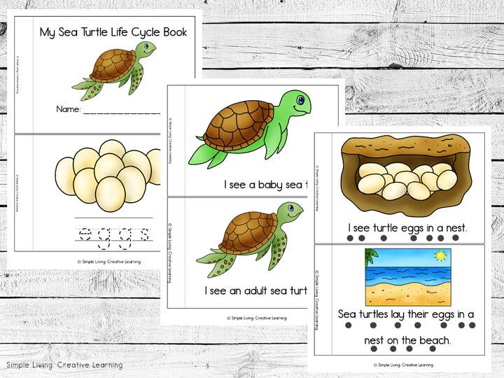 Sea Turtle Life Cycle Readers