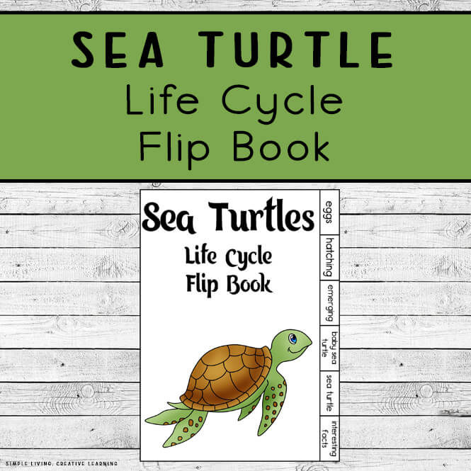 Sea Turtle Life Cycle Flip Book