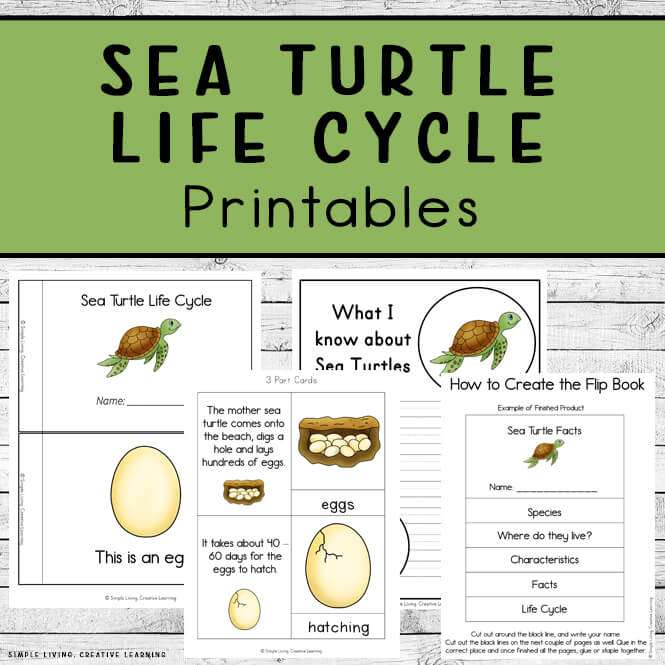 Sea Turtle Life Cycle Printables