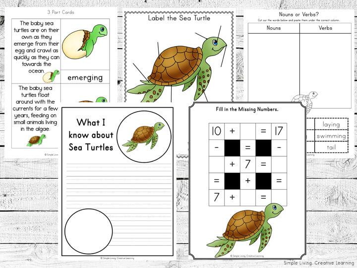 Sea Turtle Life Cycle Printables