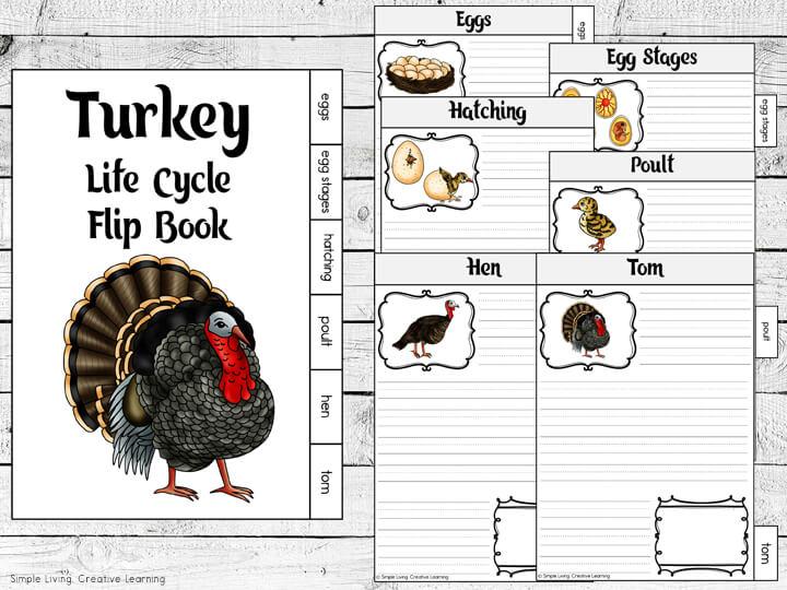 Turkey Life Cycle Flip Book