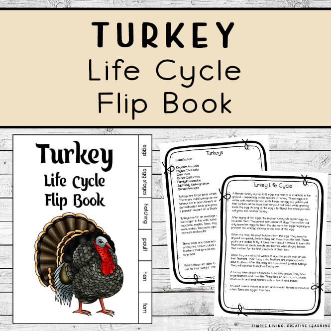 Turkey Life Cycle Flip Book