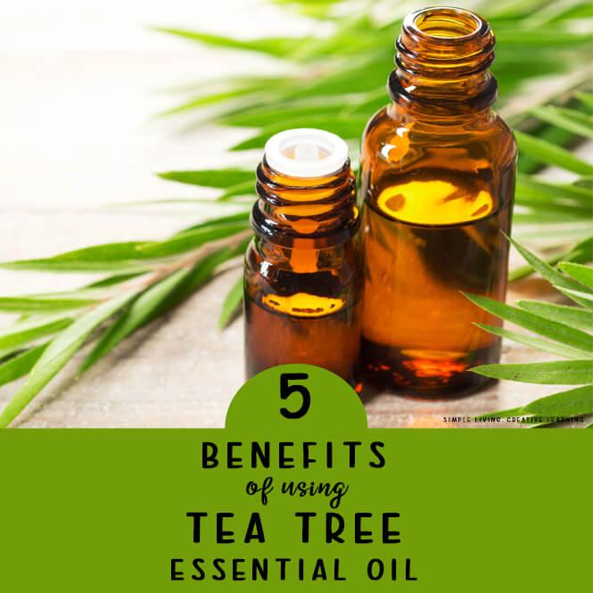 5 Benefits of Using Tea Tree Essential Oil {Melaleuca}