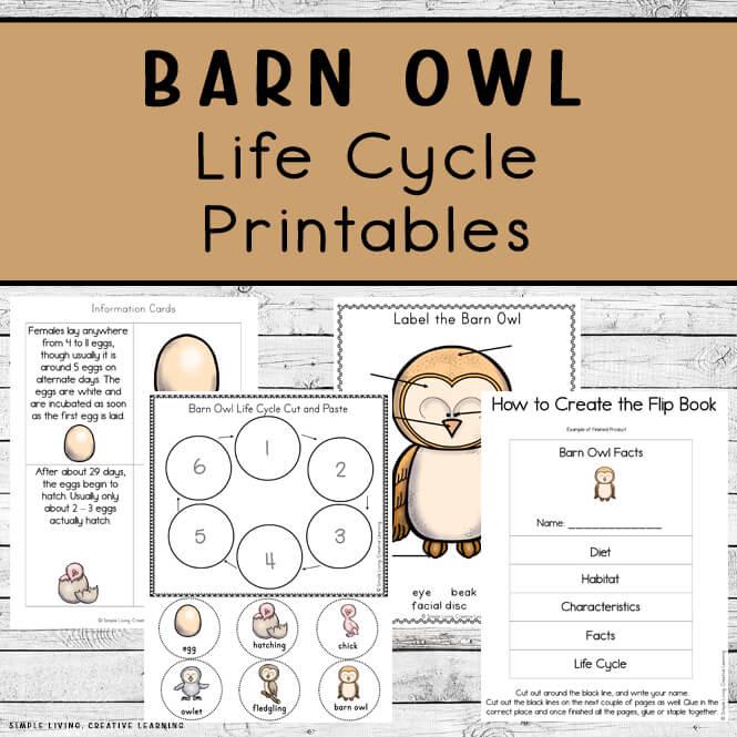 Barn Owl Life Cycle Printables