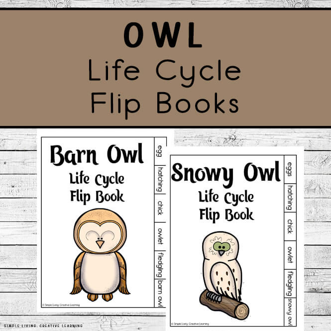 Owl Life Cycle Flip Books