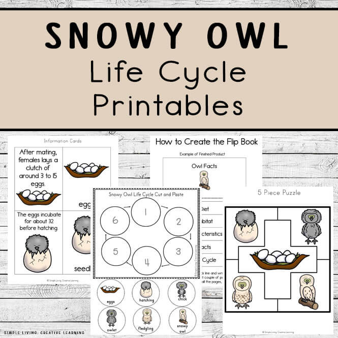 Snowy Owl Life Cycle Printables