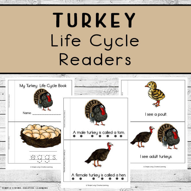 Turkey Life Cycle Readers