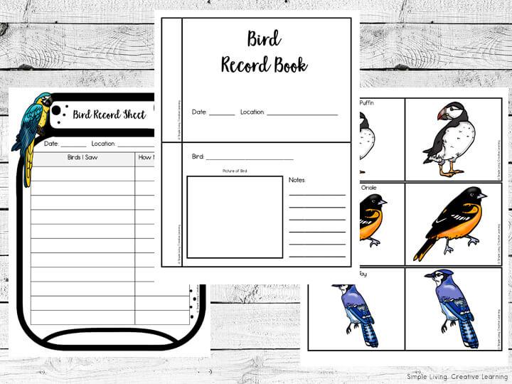 Bird Identification Cards