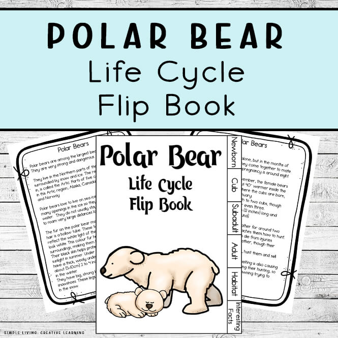 Polar Bear Life Cycle Flip Book