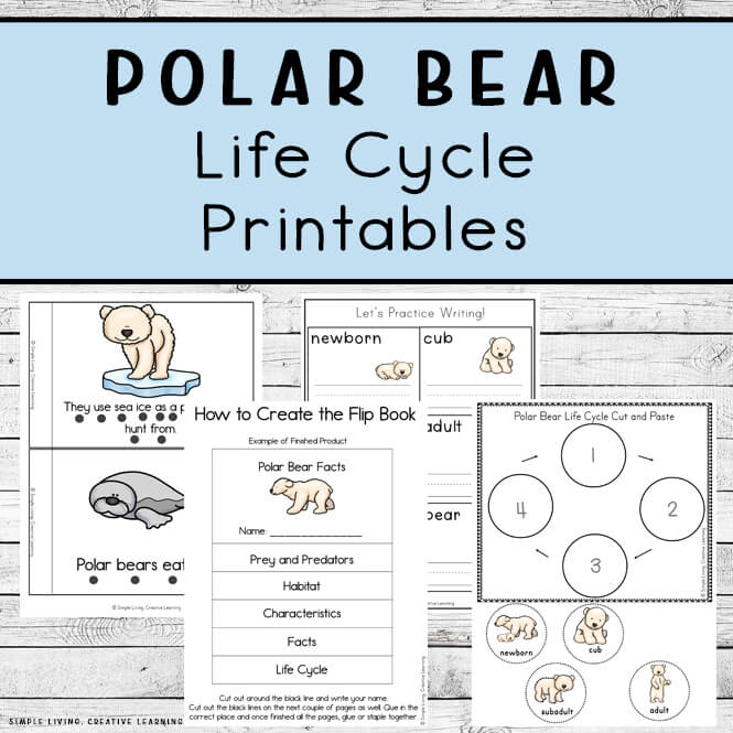 Polar Bear Life Cycle Printables