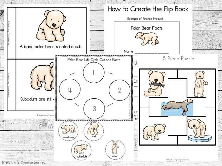 Polar Bear Life Cycle Printables
