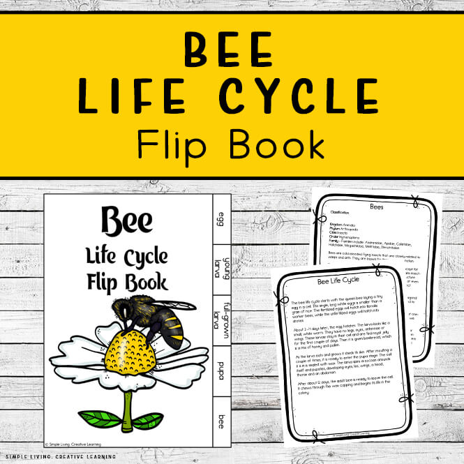 Bee Life Cycle Flip Book