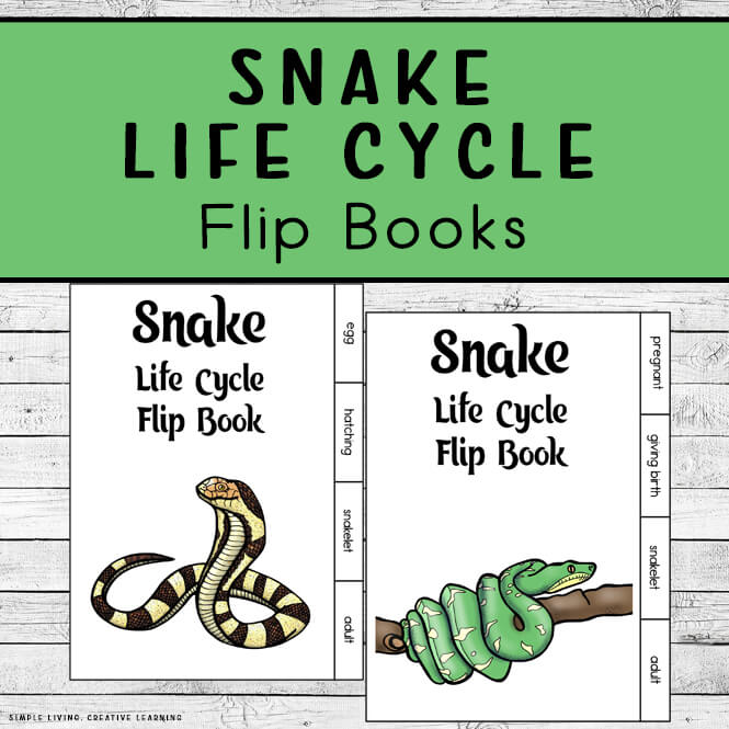 Snake Life Cycle Flip Books
