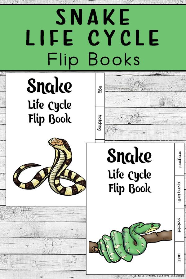 Snake Life Cycle Flip Books