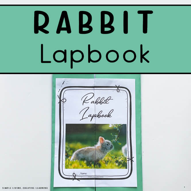 Rabbit Lapbook