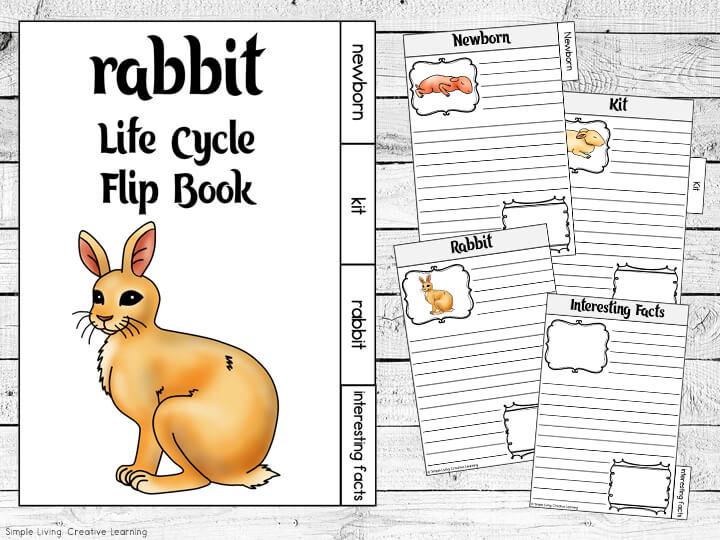 Rabbit Life Cycle Flip Book