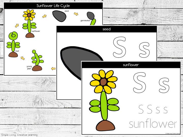 Sunflower Life Cycle Playdough Mats