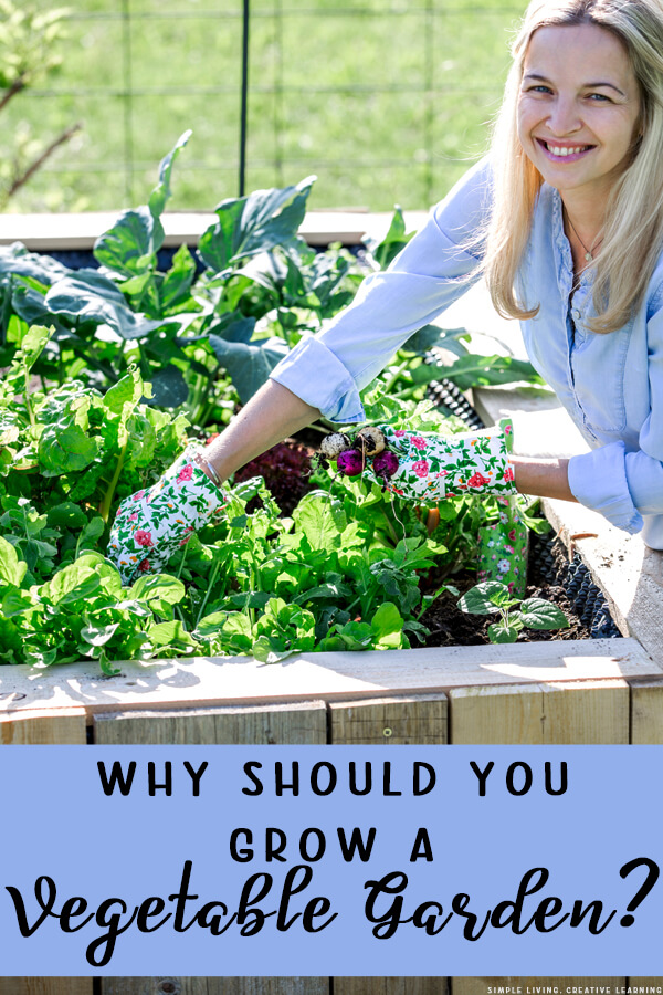 Why Should you Grow a Vegetable Garden?