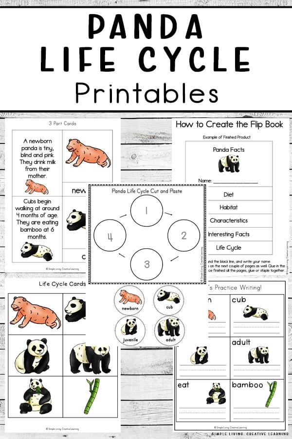 Panda Life Cycle Printables