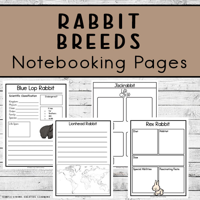 Rabbit Notebooking Pages