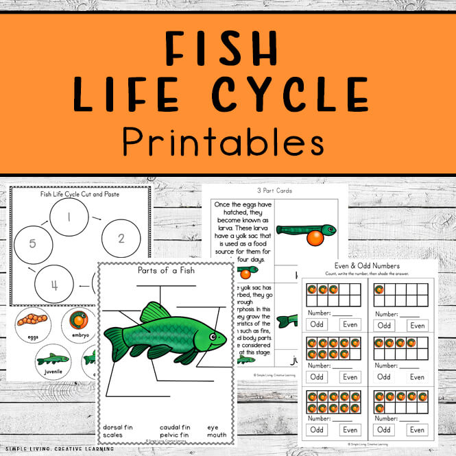 Fish Life Cycle Printables