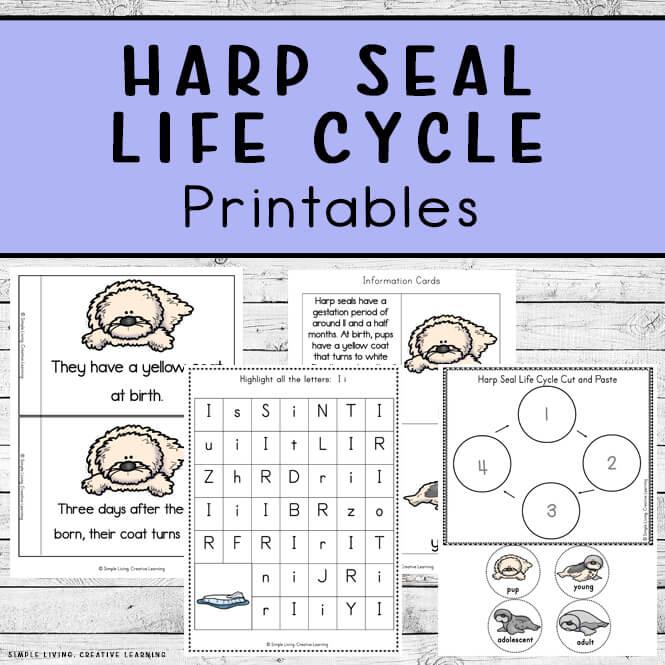 Harp Seal Life Cycle Printables