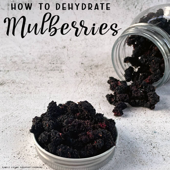 How to Dehydrate Mulberries